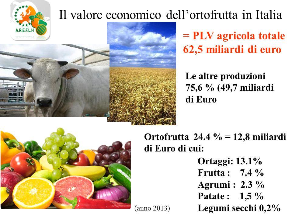 Il valore economico dell'ortofrutta in Italia Le altre produzioni 75,6 % (49,7 miliardi di Euro Ortaggi: 13.1% Frutta : 7.4 % Agrumi : 2.3 % Patate : 1,5 % Legumi secchi 0,2% = PLV agricola totale 62,5 miliardi di euro Ortofrutta 24.4 % = 12,8 miliardi di Euro di cui: (anno 2013)