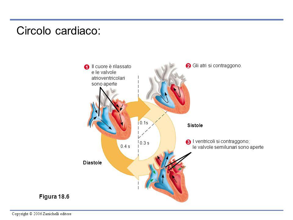 Copyright © 2006 Zanichelli editore Circolo cardiaco: Figura 18.6 Il cuore è rilassato e le valvole atrioventricolari sono aperte 1 2 Gli atri si cont