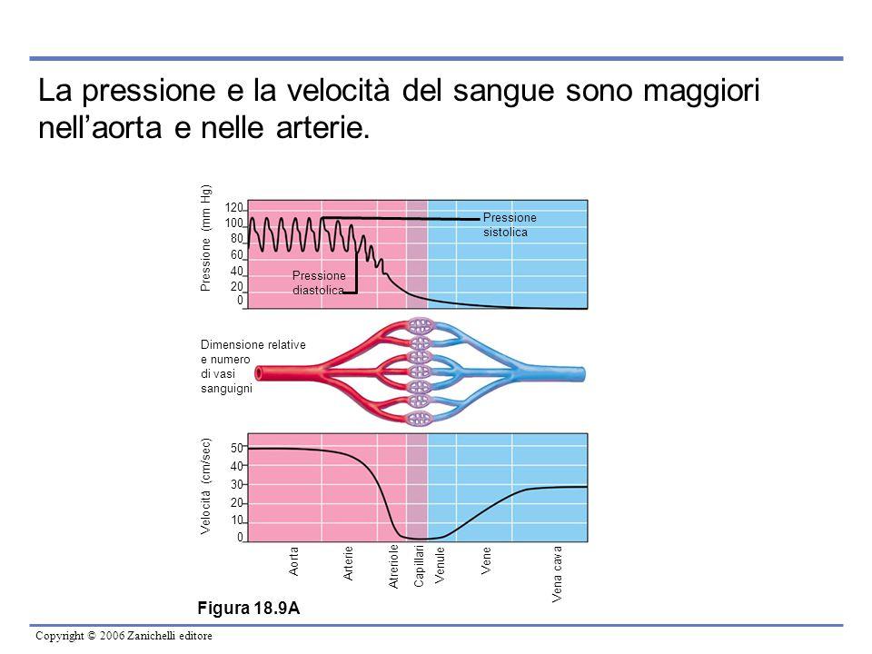 Copyright © 2006 Zanichelli editore Figura 18.9A Pressione (mm Hg) 120 100 80 60 40 20 0 Pressione sistolica Pressione diastolica Dimensione relative