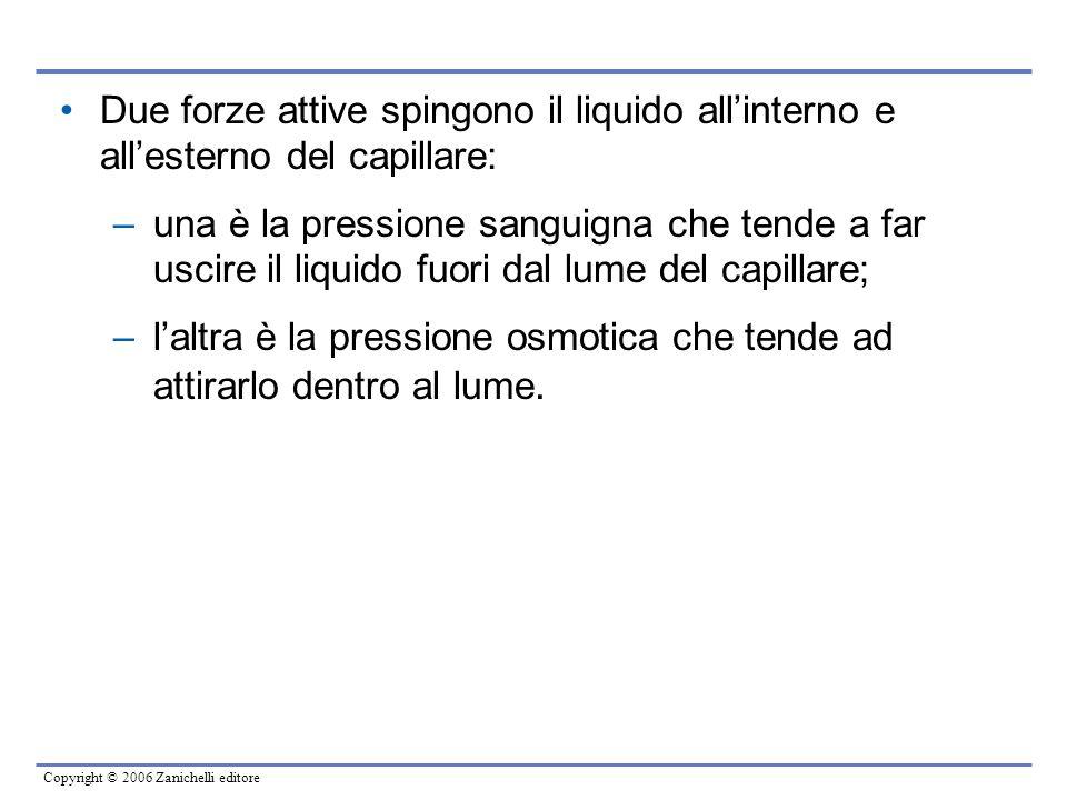 Copyright © 2006 Zanichelli editore Due forze attive spingono il liquido all'interno e all'esterno del capillare: –una è la pressione sanguigna che te