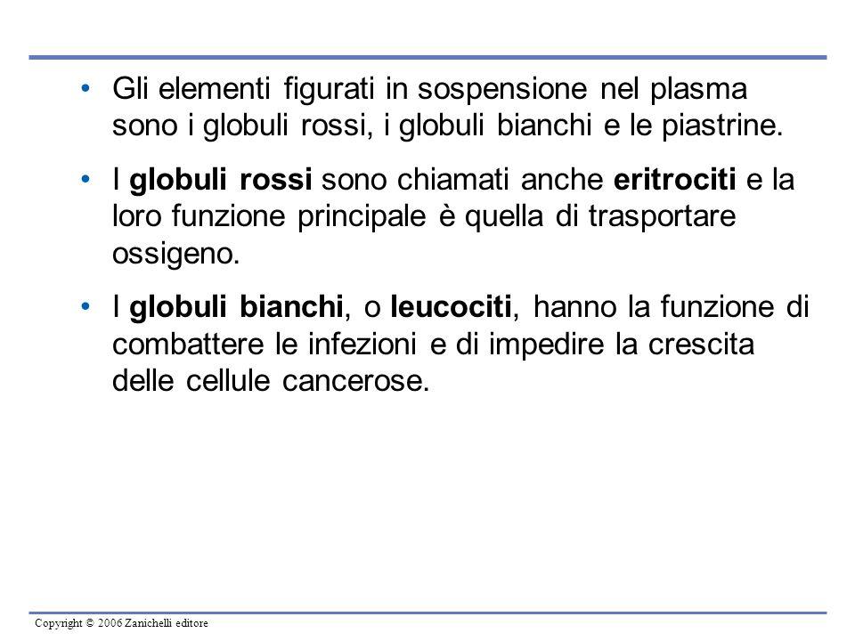 Copyright © 2006 Zanichelli editore Gli elementi figurati in sospensione nel plasma sono i globuli rossi, i globuli bianchi e le piastrine. I globuli