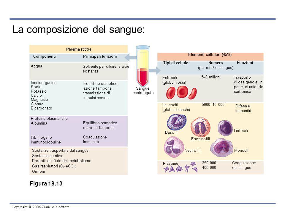 Copyright © 2006 Zanichelli editore La composizione del sangue: Elementi cellulari (45%) Tipi di cellule Numero (per mm 3 di sangue) Funzioni Eritroci