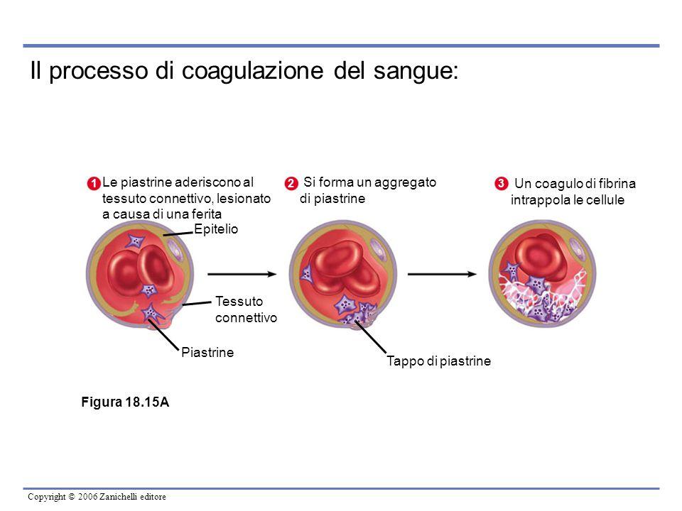 Copyright © 2006 Zanichelli editore Epitelio 1 Le piastrine aderiscono al tessuto connettivo, lesionato a causa di una ferita Tessuto connettivo Piast