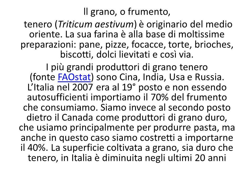 ll grano, o frumento, tenero (Triticum aestivum) è originario del medio oriente. La sua farina è alla base di moltissime preparazioni: pane, pizze, fo