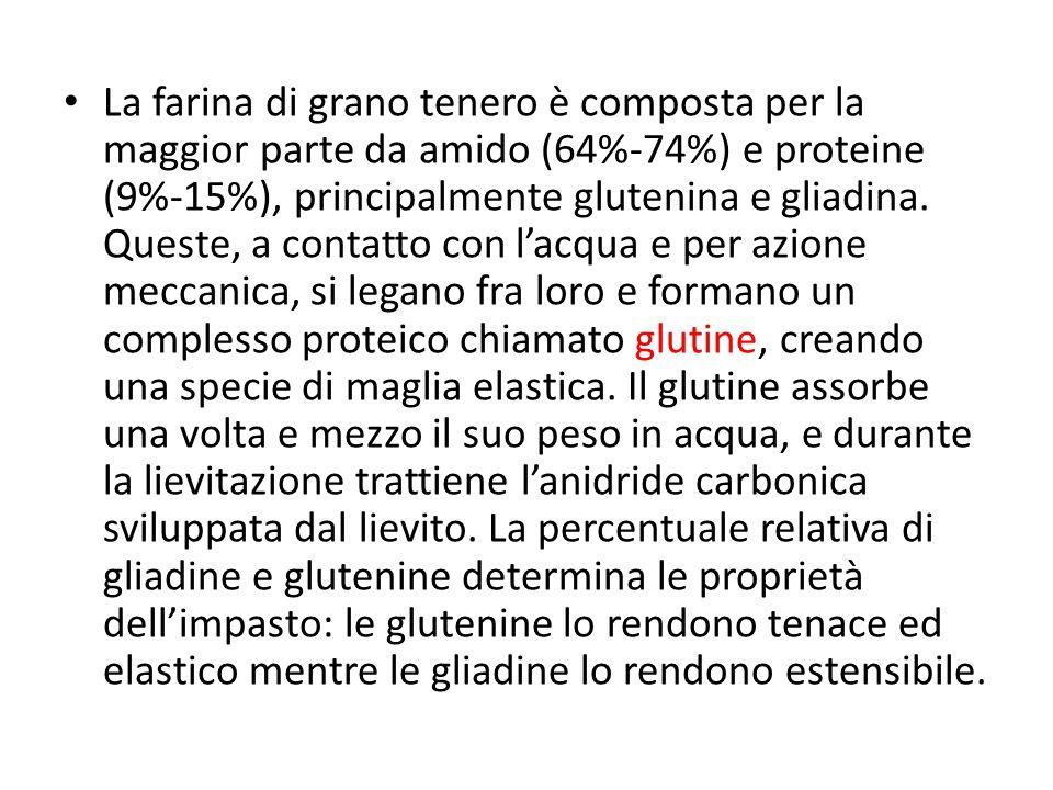 La farina di grano tenero è composta per la maggior parte da amido (64%-74%) e proteine (9%-15%), principalmente glutenina e gliadina. Queste, a conta