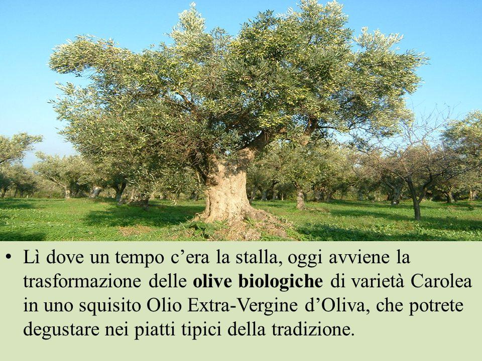 L'arrivo delle olive è quindi un punto a rischio ed il pericolo è il residuo di fitofarmaci.