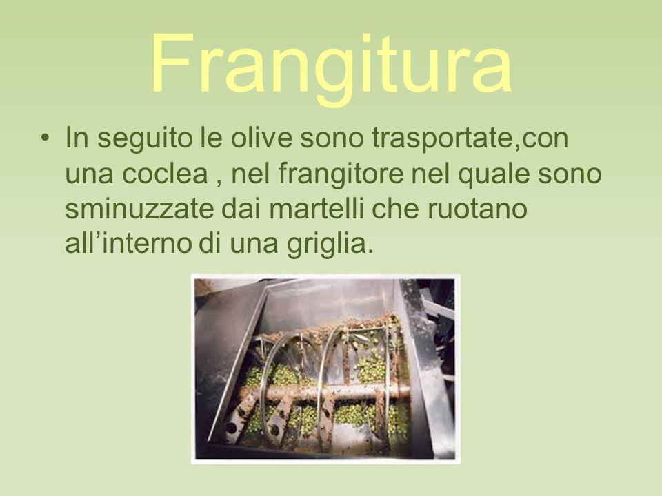 Frangitura In seguito le olive sono trasportate,con una coclea, nel frangitore nel quale sono sminuzzate dai martelli che ruotano all'interno di una griglia.