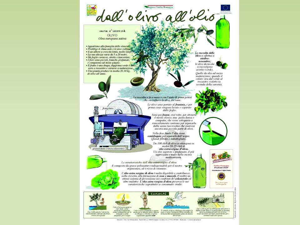 E' una buona azione preventiva avere cura di conservare le olive in locali che presentino parametri ambientali adeguati.