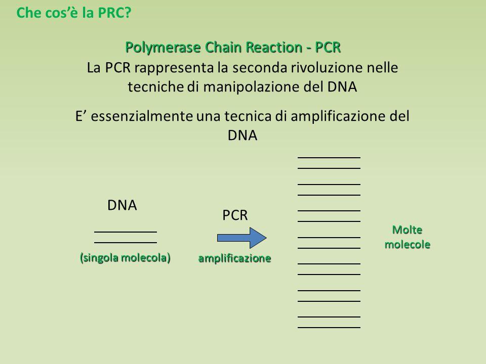 Polymerase Chain Reaction - PCR La PCR rappresenta la seconda rivoluzione nelle tecniche di manipolazione del DNA E' essenzialmente una tecnica di amplificazione del DNA PCRamplificazione DNA (singola molecola) Moltemolecole Che cos'è la PRC?