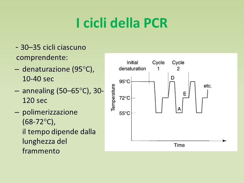 I cicli della PCR - 30–35 cicli ciascuno comprendente: – denaturazione (95°C), 10-40 sec – annealing (50–65°C), 30- 120 sec – polimerizzazione (68-72°C), il tempo dipende dalla lunghezza del frammento