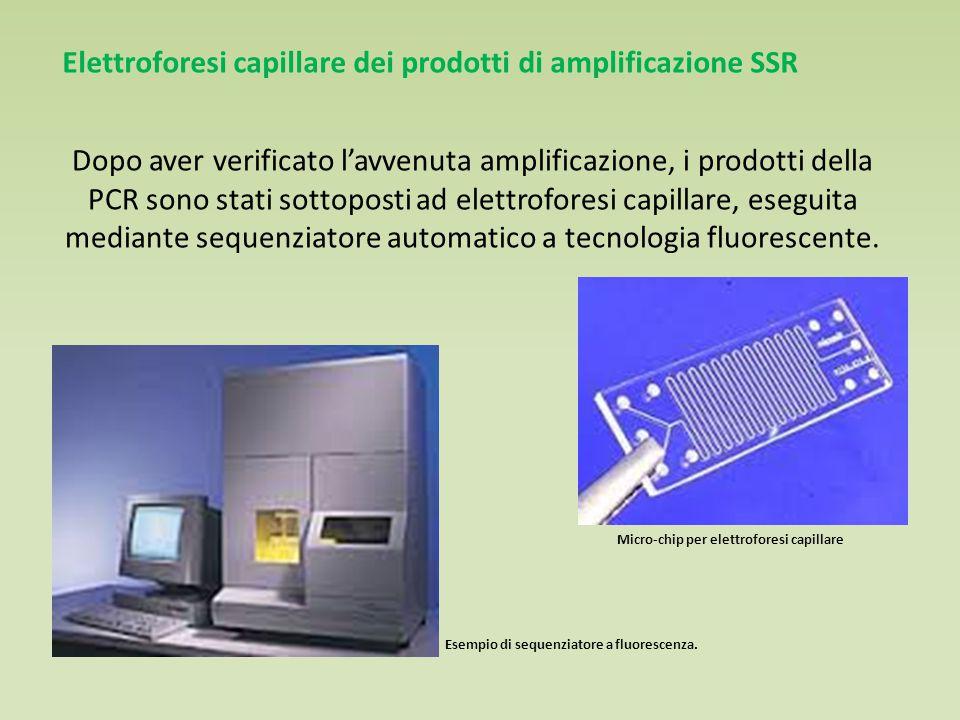 Dopo aver verificato l'avvenuta amplificazione, i prodotti della PCR sono stati sottoposti ad elettroforesi capillare, eseguita mediante sequenziatore automatico a tecnologia fluorescente.