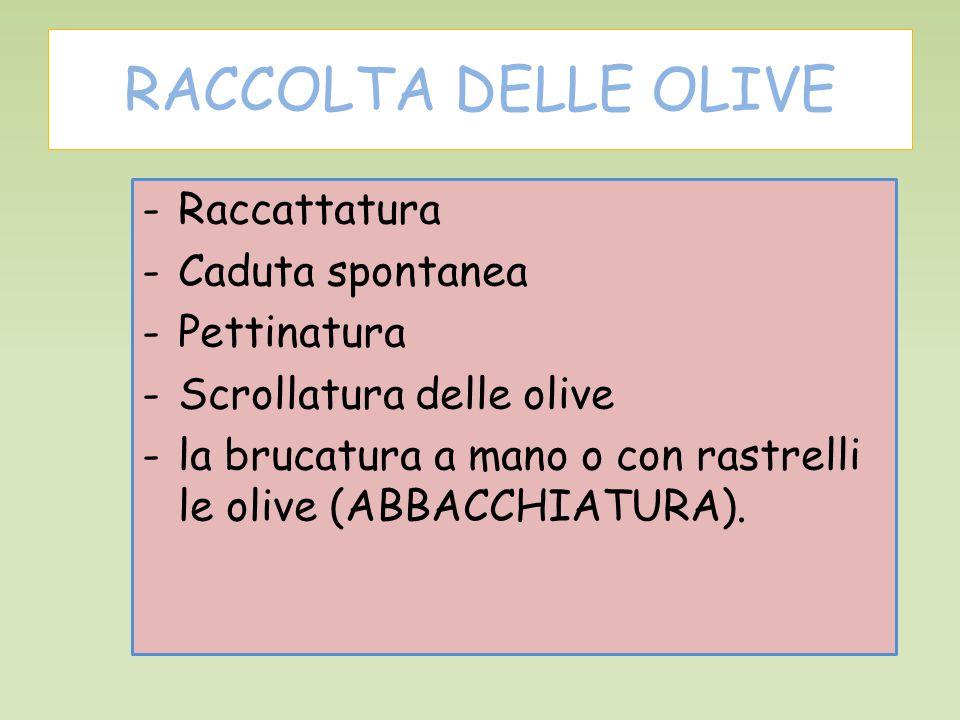 RACCOLTA DELLE OLIVE -Raccattatura -Caduta spontanea -Pettinatura -Scrollatura delle olive -la brucatura a mano o con rastrelli le olive (ABBACCHIATURA).