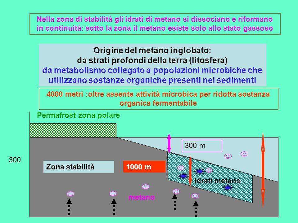 Permafrost zona polare 300 300 m 1000 m Idrati metano Zona stabilità Nella zona di stabilità gli idrati di metano si dissociano e riformano in continuità: sotto la zona il metano esiste solo allo stato gassoso metano Origine del metano inglobato: da strati profondi della terra (litosfera) da metabolismo collegato a popolazioni microbiche che utilizzano sostanze organiche presenti nei sedimenti 4000 metri :oltre assente attività microbica per ridotta sostanza organica fermentabile