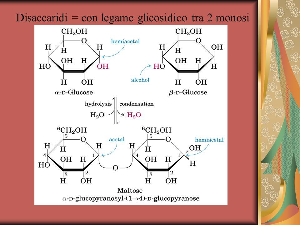 Disaccaridi = con legame glicosidico tra 2 monosi