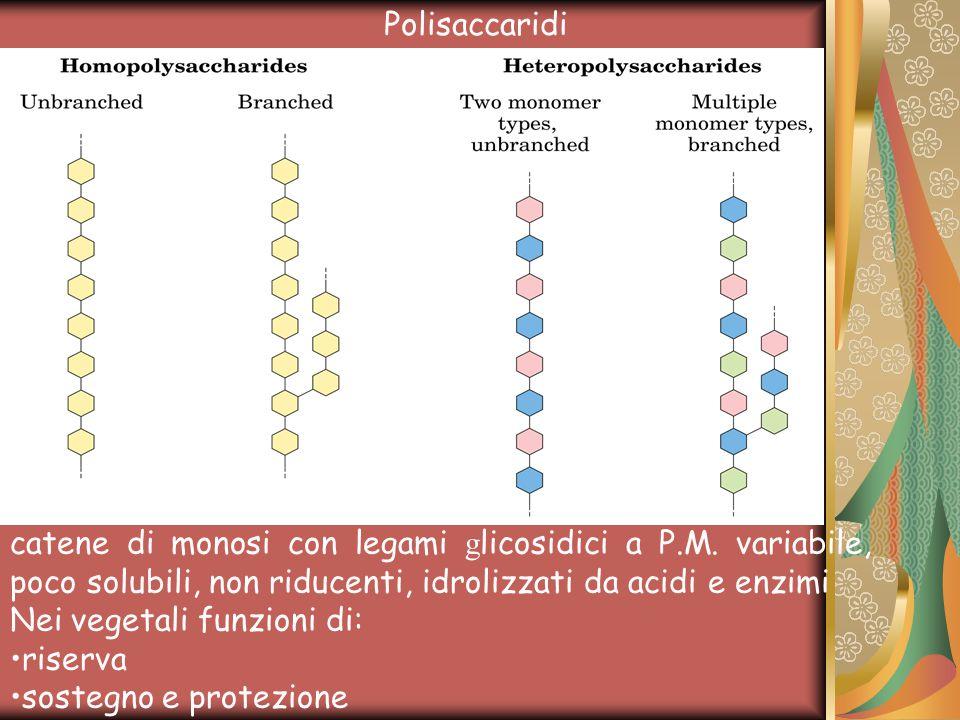 catene di monosi con legami g licosidici a P.M.