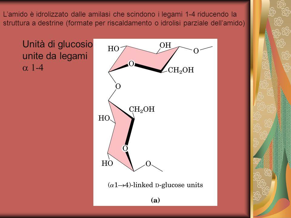 Unità di glucosio unite da legami  1-4 L'amido è idrolizzato dalle amilasi che scindono i legami 1-4 riducendo la struttura a destrine (formate per riscaldamento o idrolisi parziale dell'amido)