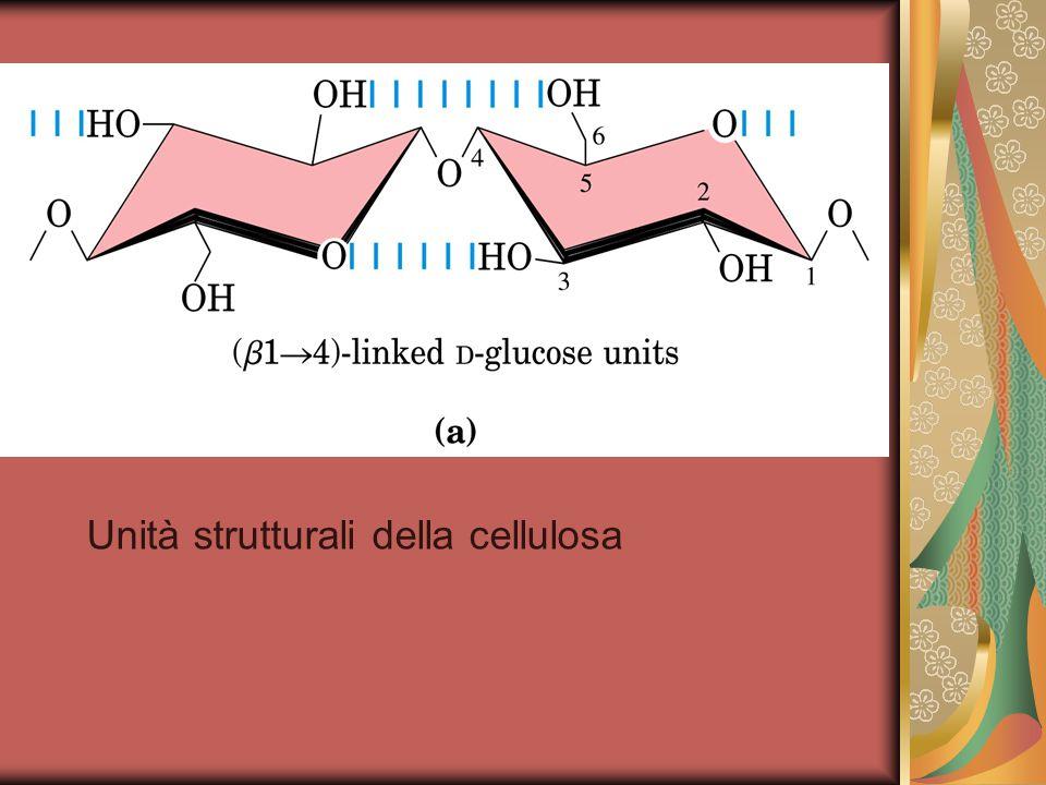Unità strutturali della cellulosa
