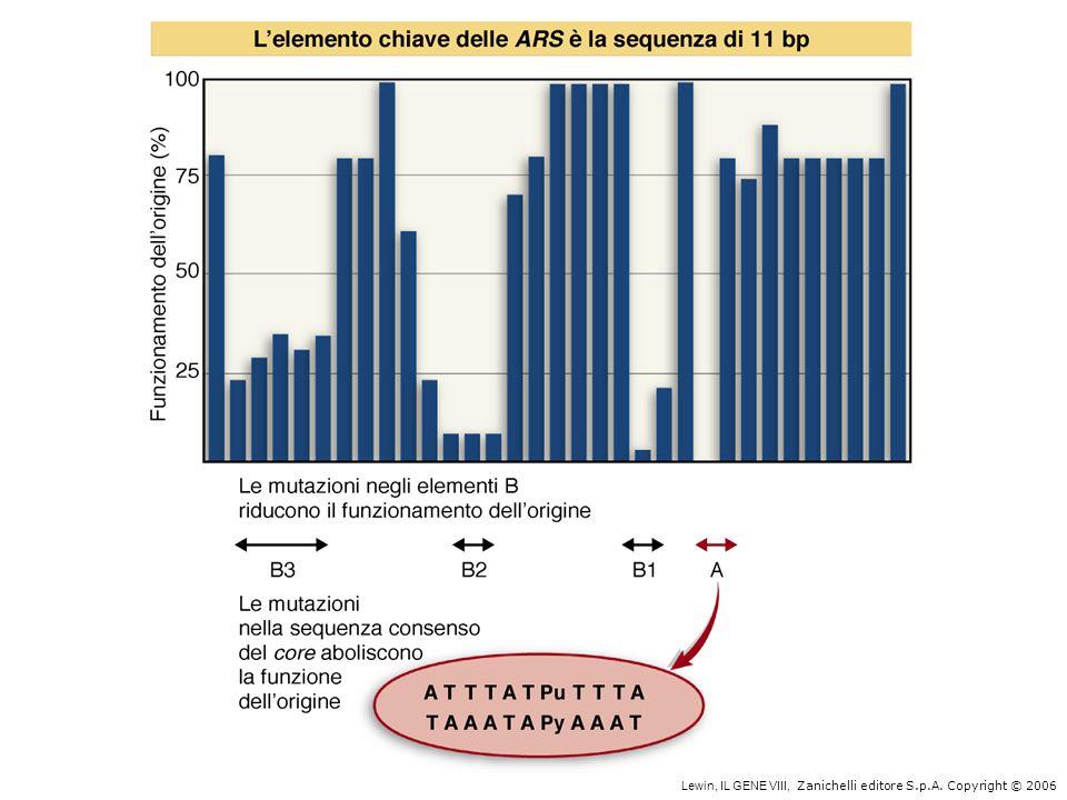 ---ATTTATPuTTTA--- ---TAAATAPyAAAT--- GATCTNTTNTTTTTTATNCANA 245 bp Origine di replicazione di E.coli A.R.S.