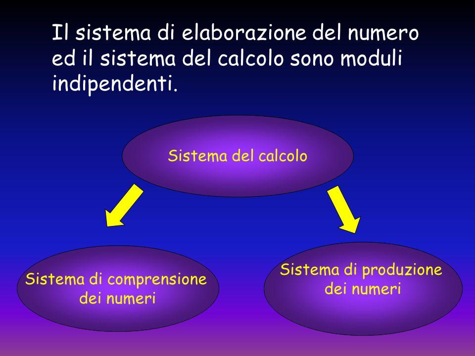  Il sistema di comprensione trasforma la struttura superficiale dei numeri in una rappresentazione astratta di quantità.