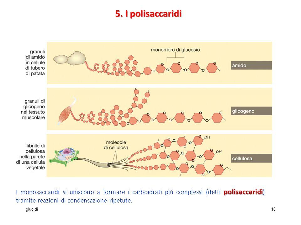 glucidi10 polisaccaridi I monosaccaridi si uniscono a formare i carboidrati più complessi (detti polisaccaridi ) tramite reazioni di condensazione ripetute.