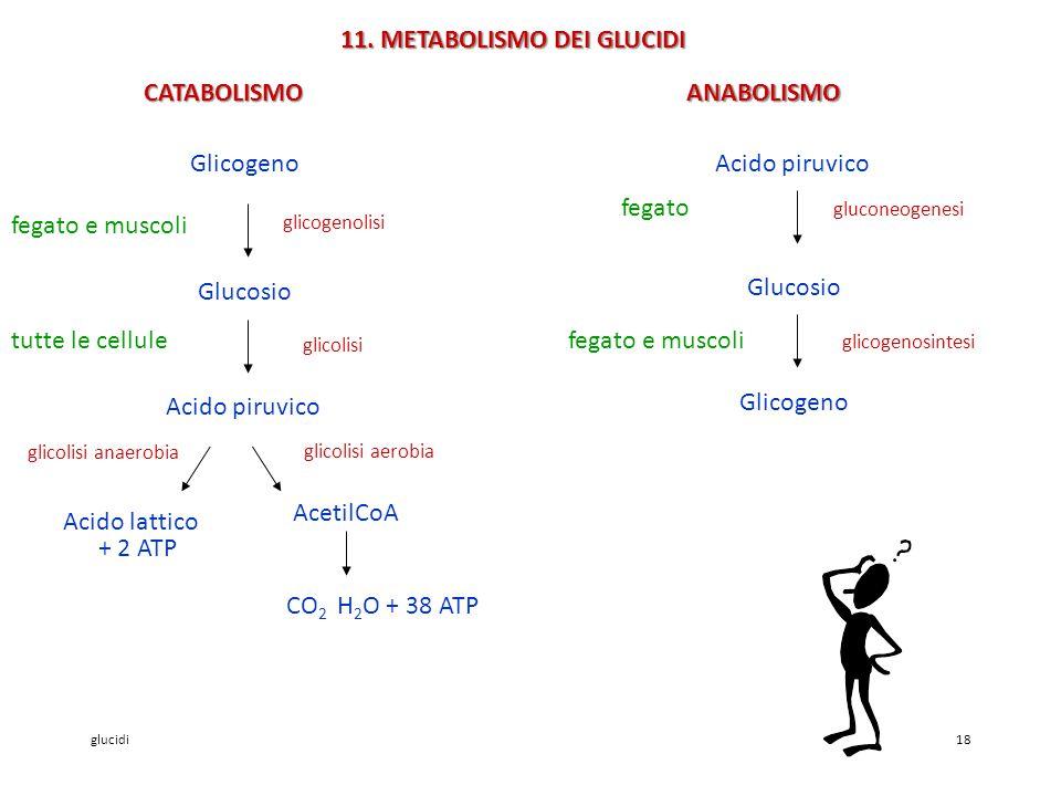 glucidi18 11.