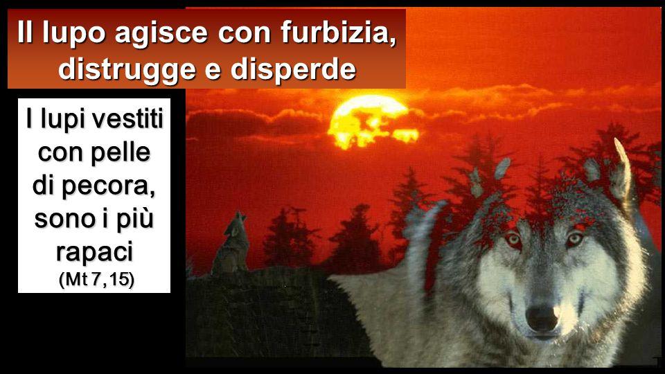 e il lupo le rapisce e le disperde;