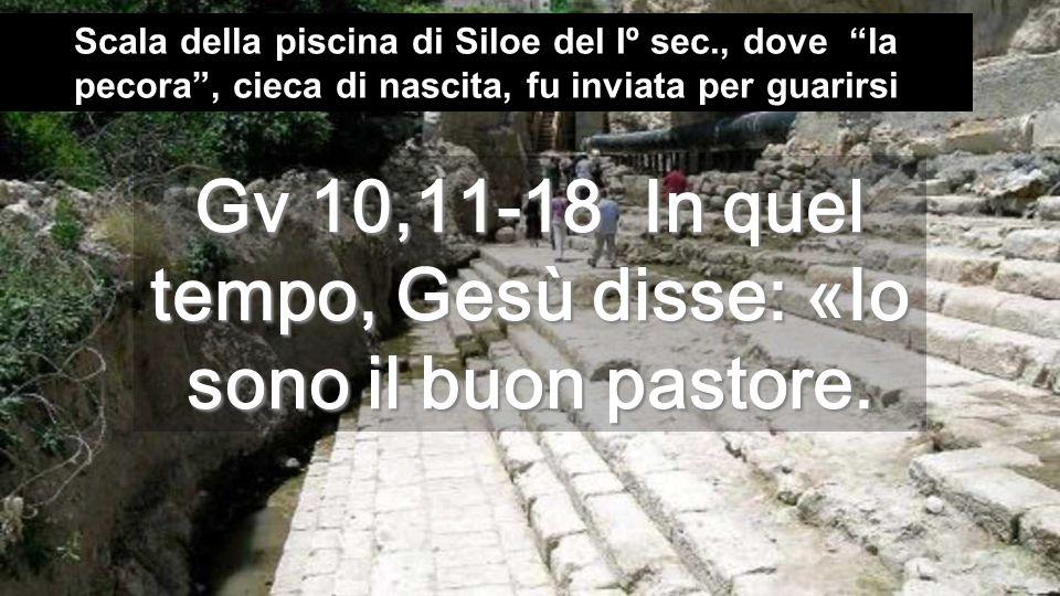 Gv 10,11-18 In quel tempo, Gesù disse: «Io sono il buon pastore.