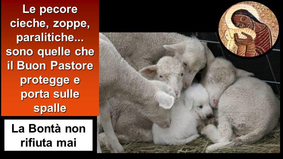 La Bontà non rifiuta mai Le pecore cieche, zoppe, paralitiche...