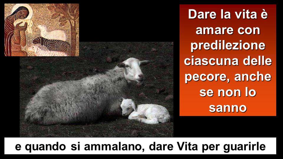 Dare la vita è amare con predilezione ciascuna delle pecore, anche se non lo sanno e quando si ammalano, dare Vita per guarirle