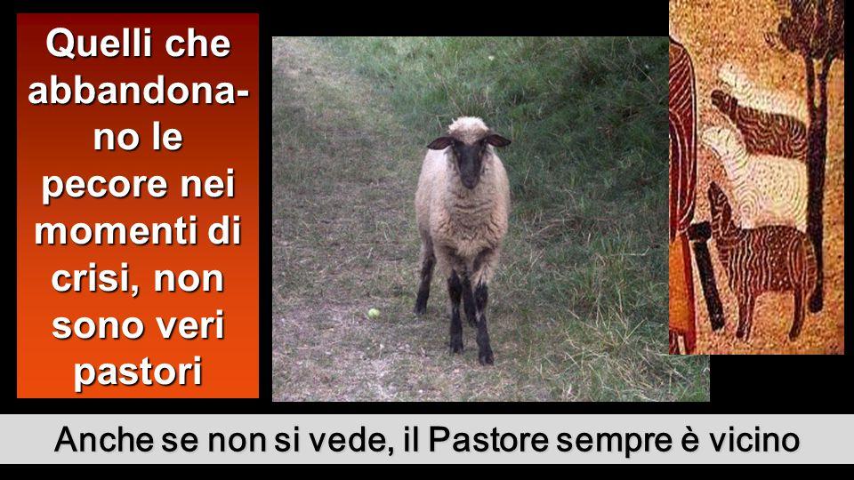 Anche se non si vede, il Pastore sempre è vicino Quelli che abbandona- no le pecore nei momenti di crisi, non sono veri pastori