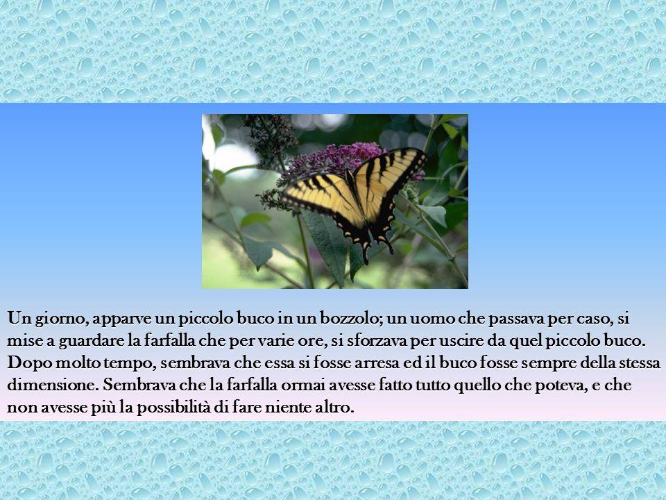 Un giorno, apparve un piccolo buco in un bozzolo; un uomo che passava per caso, si mise a guardare la farfalla che per varie ore, si sforzava per uscire da quel piccolo buco.