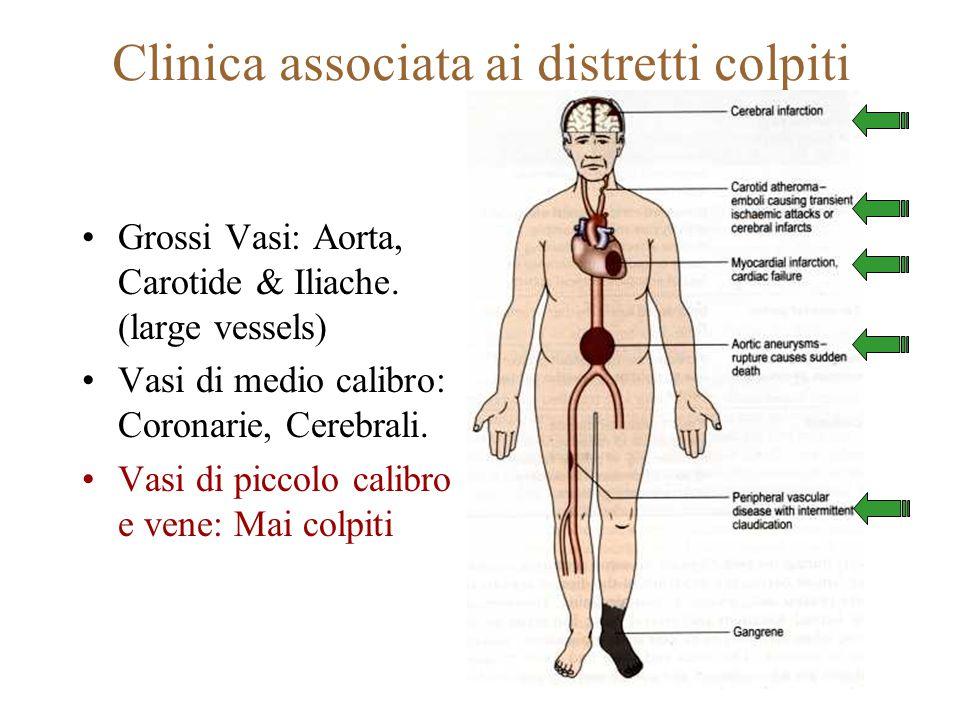 Clinica associata ai distretti colpiti Grossi Vasi: Aorta, Carotide & Iliache. (large vessels) Vasi di medio calibro: Coronarie, Cerebrali. Vasi di pi