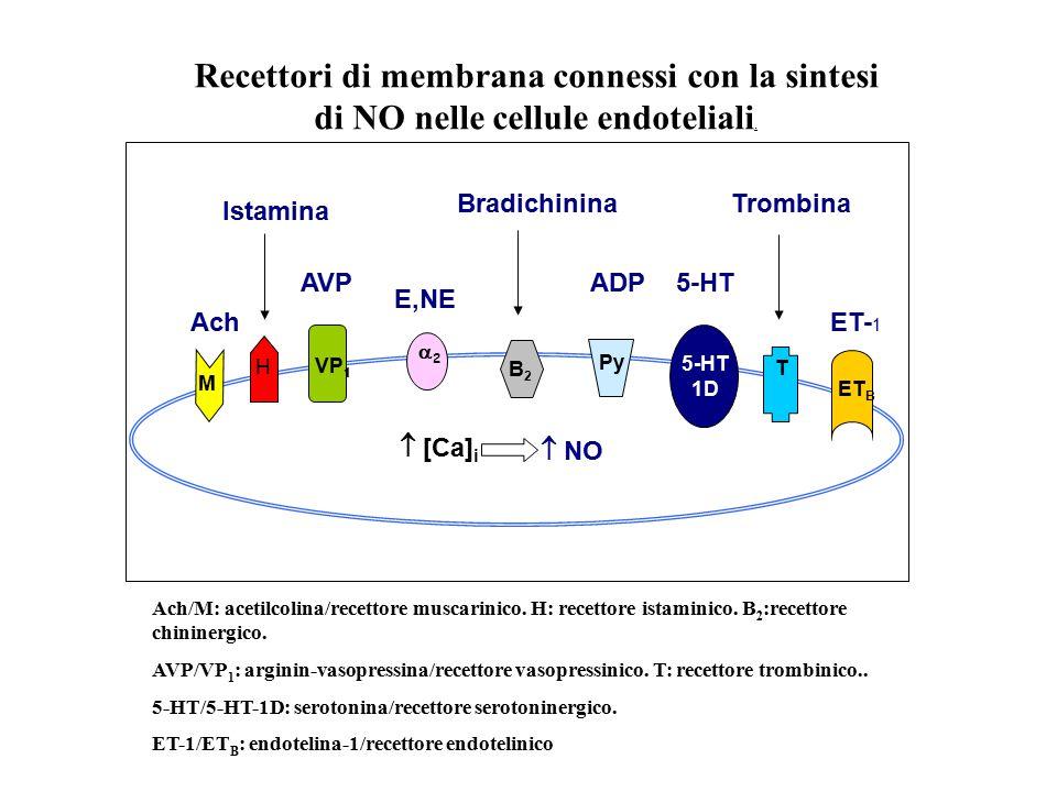 M H VP 1 22 B2B2 Py 5-HT 1D T ET B  [Ca] i  NO ET- 1 5-HT Trombina ADP Bradichinina E,NE Ach Istamina AVP Recettori di membrana connessi con la si