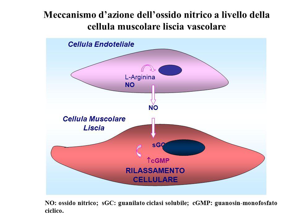 sGC  cGMP L-Arginina NO RILASSAMENTO CELLULARE Cellula Endoteliale Cellula Muscolare Liscia NO Meccanismo d'azione dell'ossido nitrico a livello dell