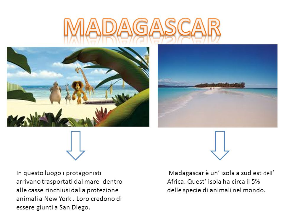 When the animals arrive in Madagascar, they believe that they are in San Diego Madagascar is an island.
