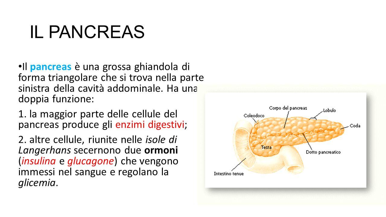 IL PANCREAS Il pancreas è una grossa ghiandola di forma triangolare che si trova nella parte sinistra della cavità addominale. Ha una doppia funzione: