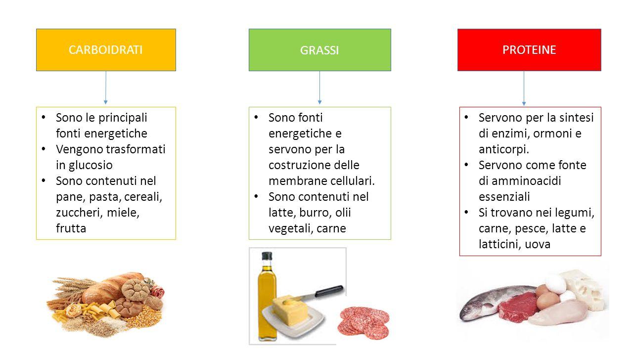 CARBOIDRATIPROTEINE Sono le principali fonti energetiche Vengono trasformati in glucosio Sono contenuti nel pane, pasta, cereali, zuccheri, miele, fru