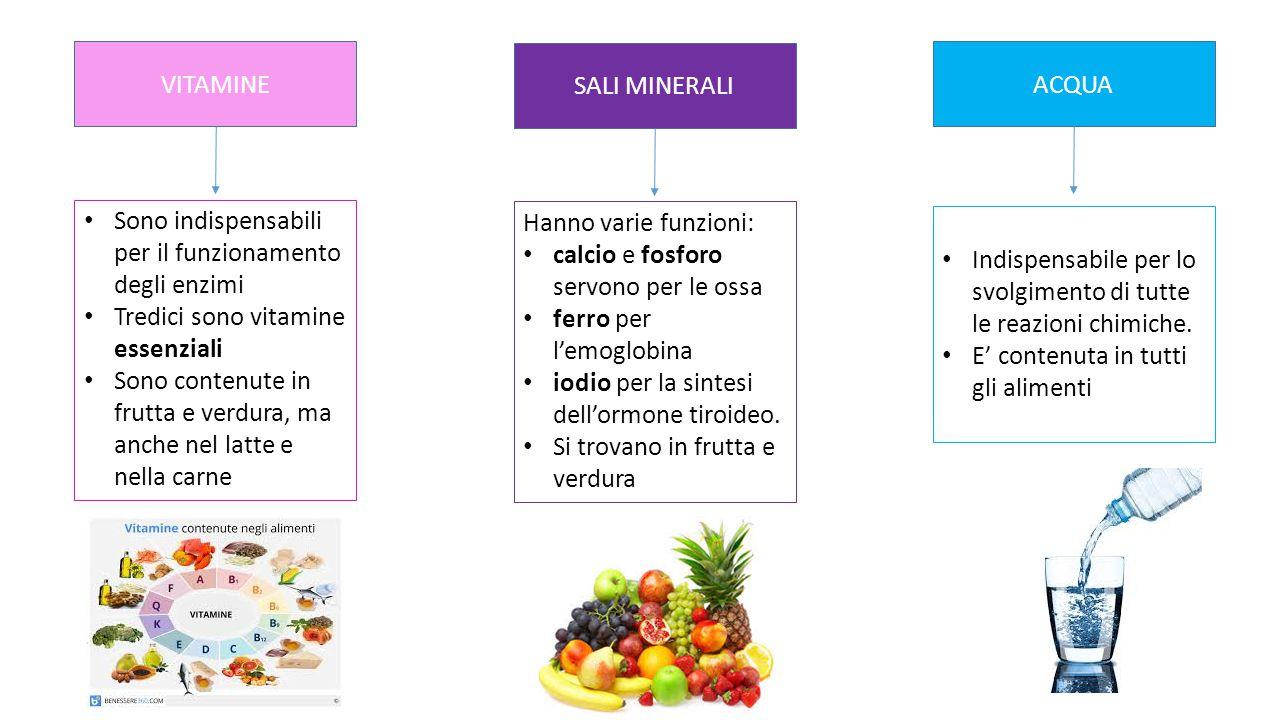 VITAMINE Sono indispensabili per il funzionamento degli enzimi Tredici sono vitamine essenziali Sono contenute in frutta e verdura, ma anche nel latte