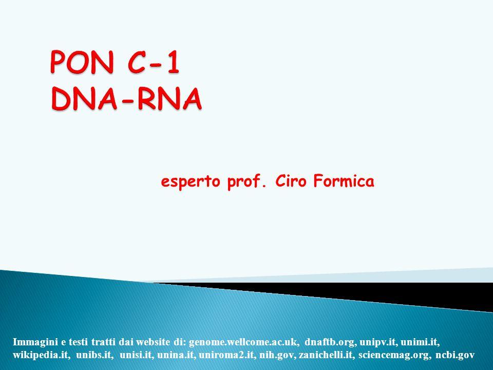 esperto prof. Ciro Formica Immagini e testi tratti dai website di: genome.wellcome.ac.uk, dnaftb.org, unipv.it, unimi.it, wikipedia.it, unibs.it, unis