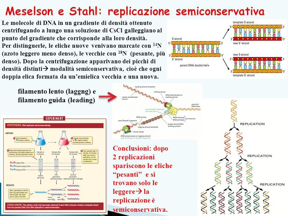 11 Le molecole di DNA in un gradiente di densità ottenuto centrifugando a lungo una soluzione di CsCl galleggiano al punto del gradiente che corrisponde alla loro densità.