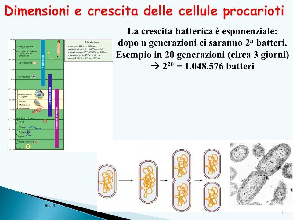 16 Bacilli La crescita batterica è esponenziale: dopo n generazioni ci saranno 2 n batteri. Esempio in 20 generazioni (circa 3 giorni)  2 20 = 1.048.