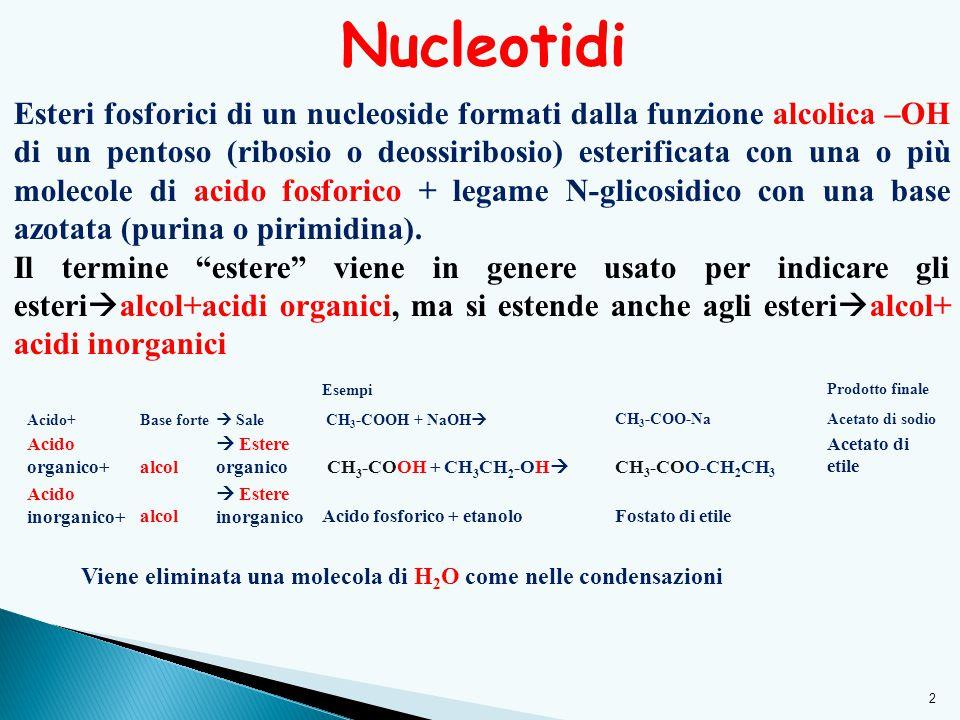 2 Nucleotidi Esteri fosforici di un nucleoside formati dalla funzione alcolica –OH di un pentoso (ribosio o deossiribosio) esterificata con una o più molecole di acido fosforico + legame N-glicosidico con una base azotata (purina o pirimidina).