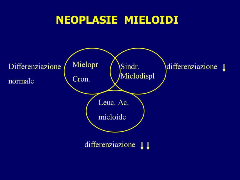 MYELO-PROLIFERATIVE DISORDERS ACUTE expansion of poorly differentiated elements often with bone marrow functional failure example: acute myeloid leukemia de novo short survival if untreated CHRONIC expansion of well differentiated elements from bone marrow failure to bone marrow hyperfunction example; cronic myeloid leukemia, policitemia vera, essential thrombocytopenia prolonged survival if left untreated tend to loose differentiation with time