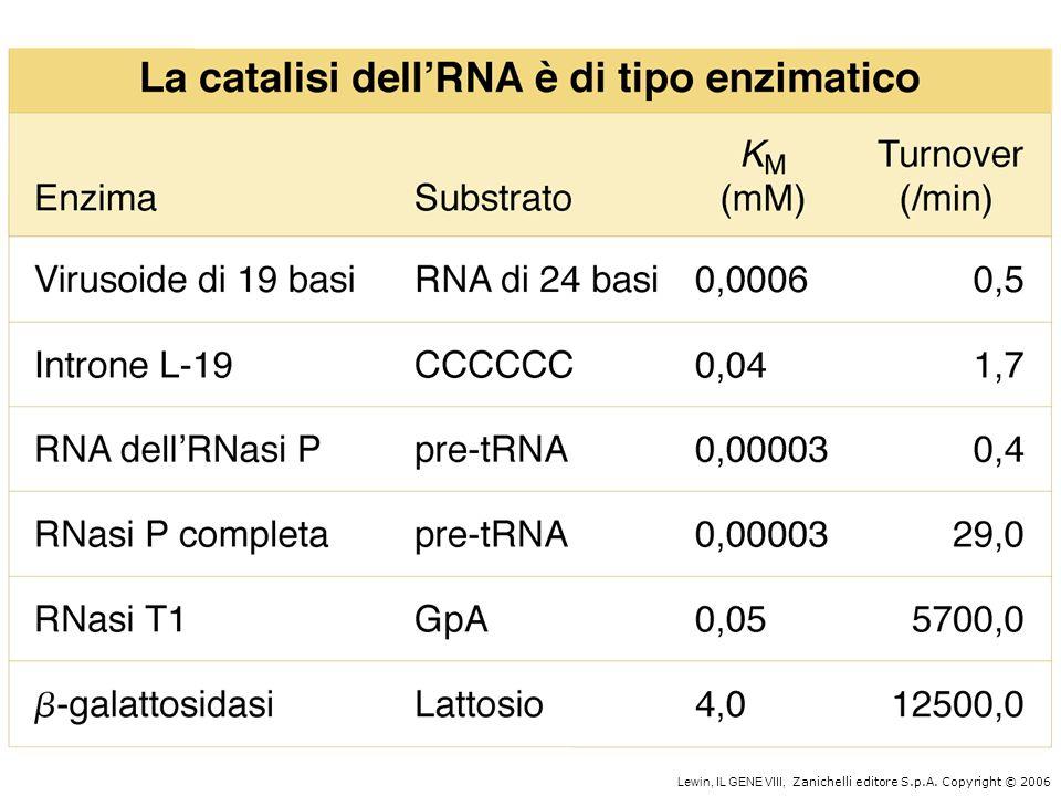 siRNA (small interfering RNA) miRNA (micro RNA)