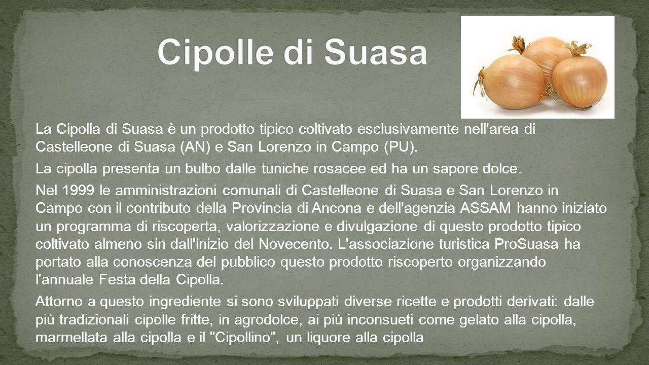La Cipolla di Suasa è un prodotto tipico coltivato esclusivamente nell area di Castelleone di Suasa (AN) e San Lorenzo in Campo (PU).