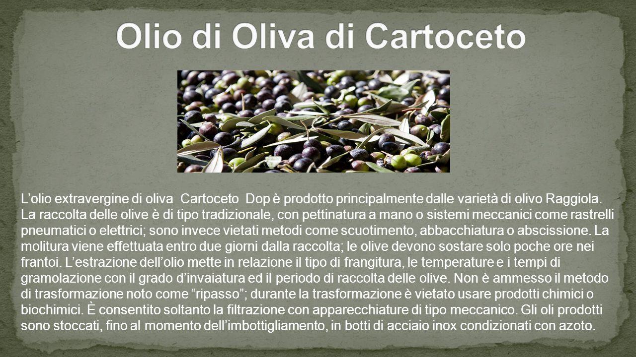 L'olio extravergine di oliva Cartoceto Dop è prodotto principalmente dalle varietà di olivo Raggiola.