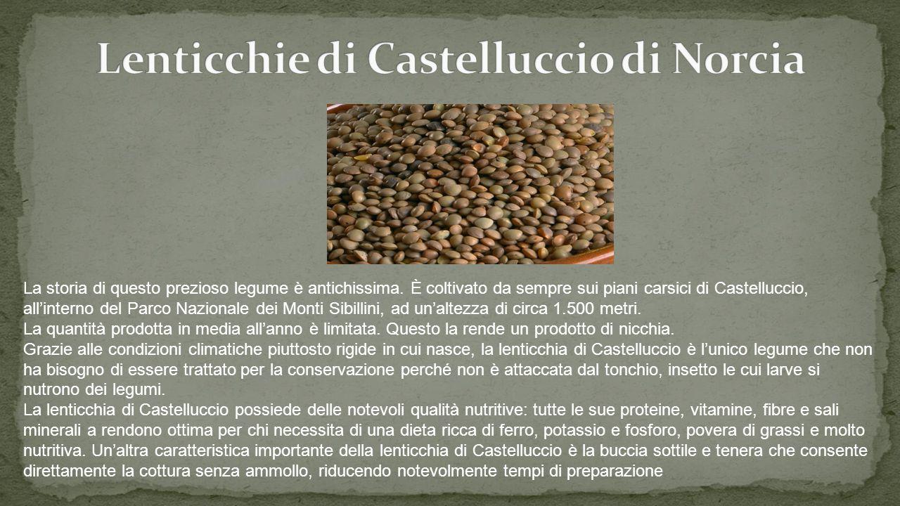 La storia di questo prezioso legume è antichissima.