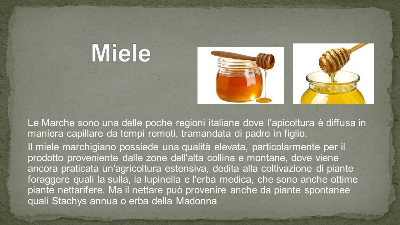 Le Marche sono una delle poche regioni italiane dove l apicoltura è diffusa in maniera capillare da tempi remoti, tramandata di padre in figlio.