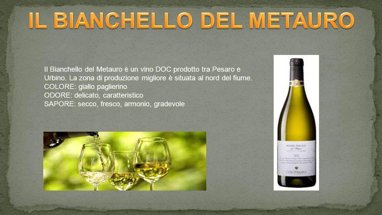Il Bianchello del Metauro è un vino DOC prodotto tra Pesaro e Urbino.
