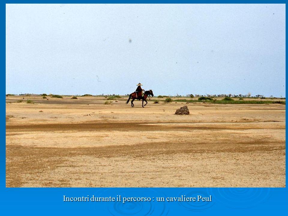 Incontri durante il percorso : un cavaliere Peul